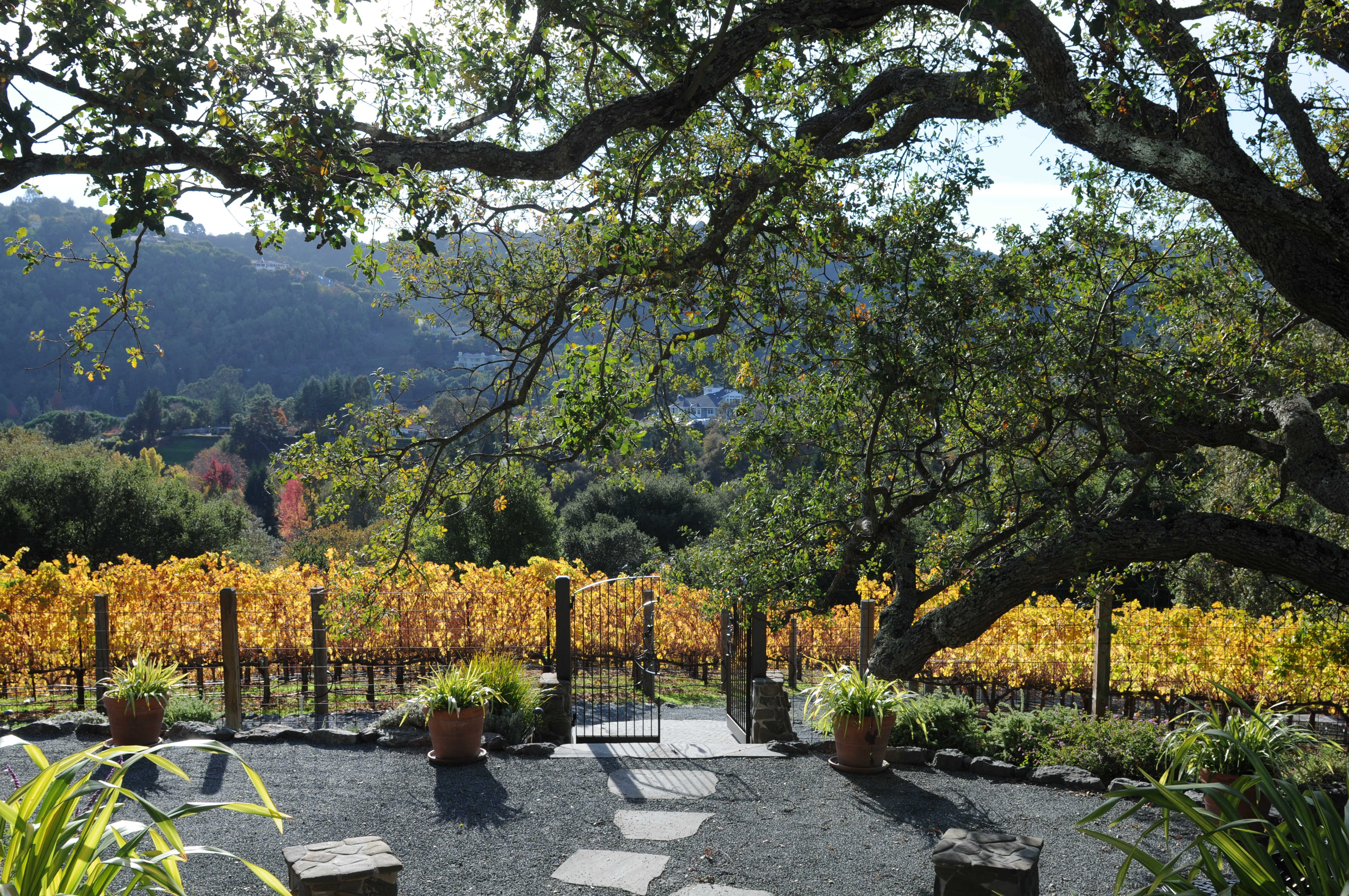 Reliez Valley Vineyards