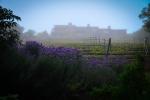 lavendarhome.jpg